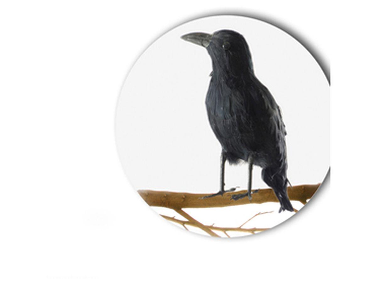 corvo grandezza naturale