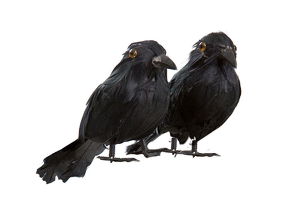 2 corvi piccoli